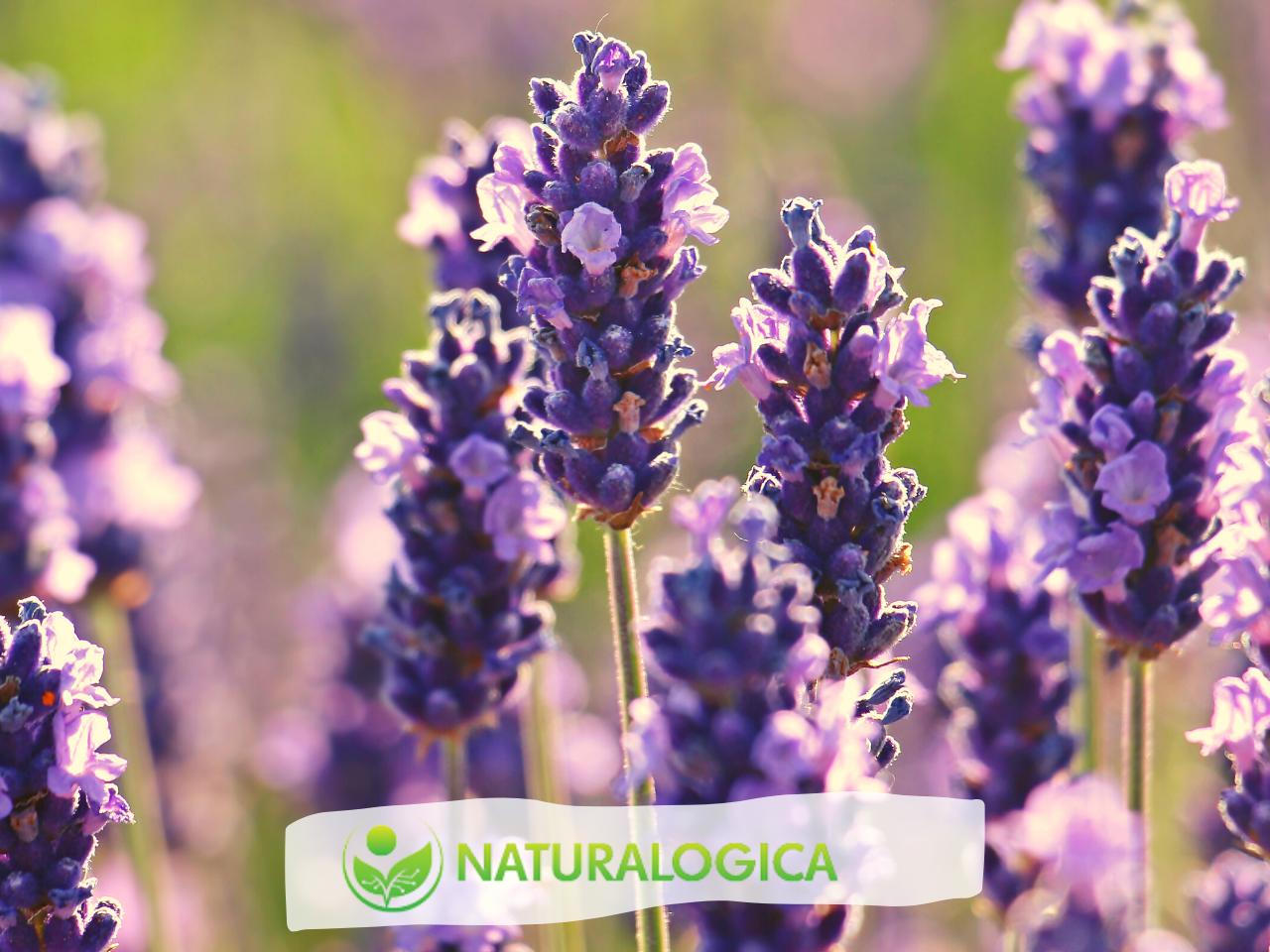 4 ricette di olio massaggio rilassante fai da te con oli essenziali.