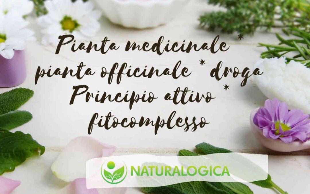 Pianta medicinale in foto piante varie