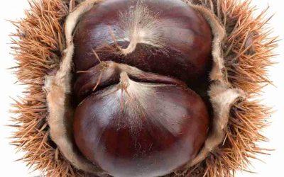Il frutto come nasce e tipi di frutto