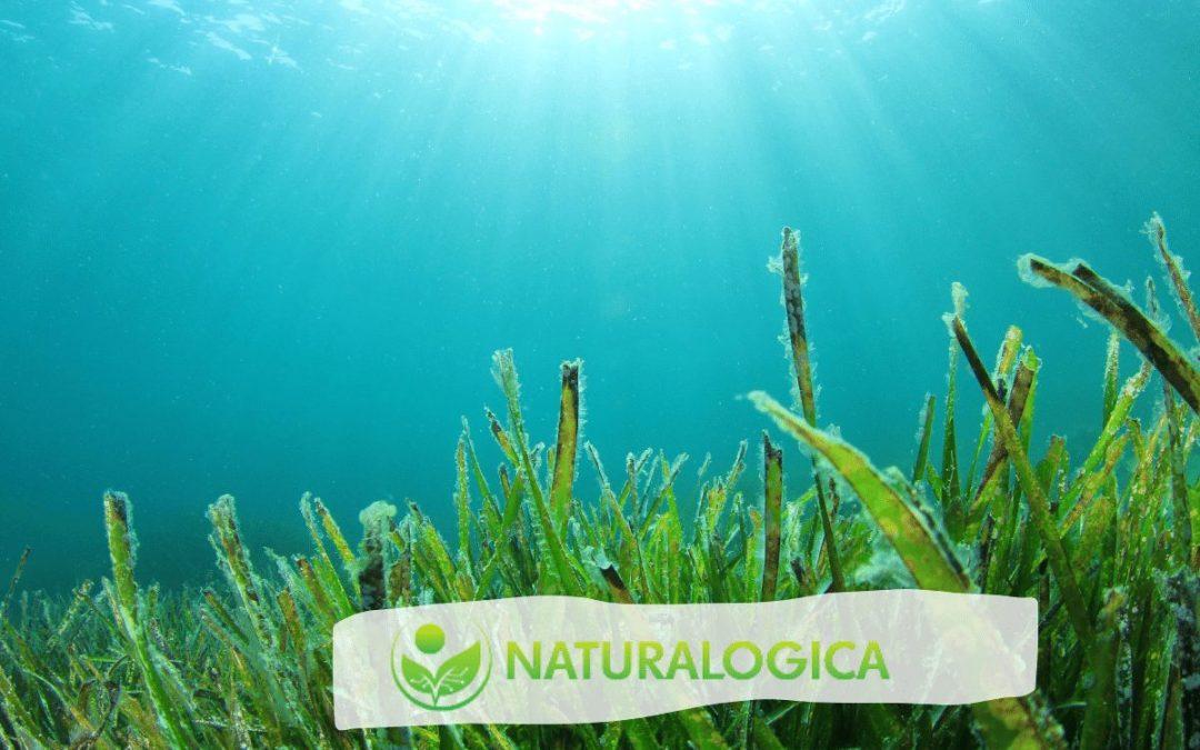 I tessuti delle piante meno evolute