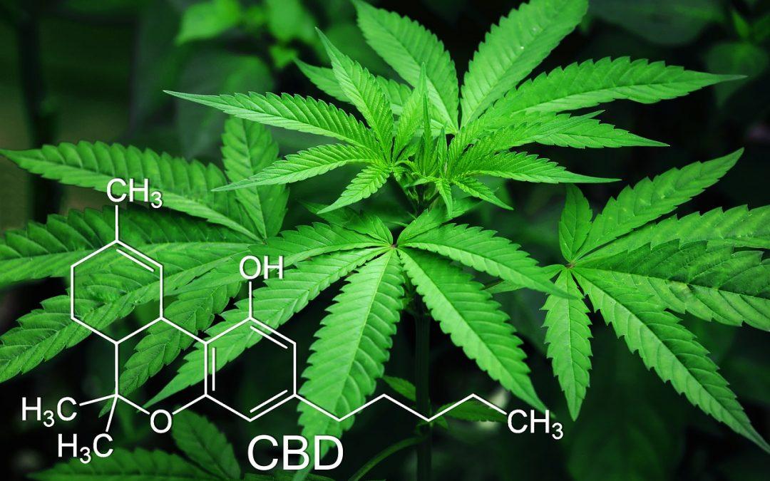 Cannabis sativa proprieta