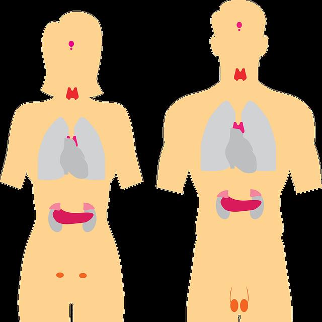 Apparato endocrino – appunti Anatomia per scienze e tecnologie farmaceutiche