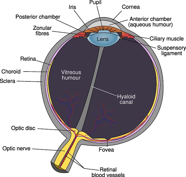Come funzionano l'occhio è la vista?