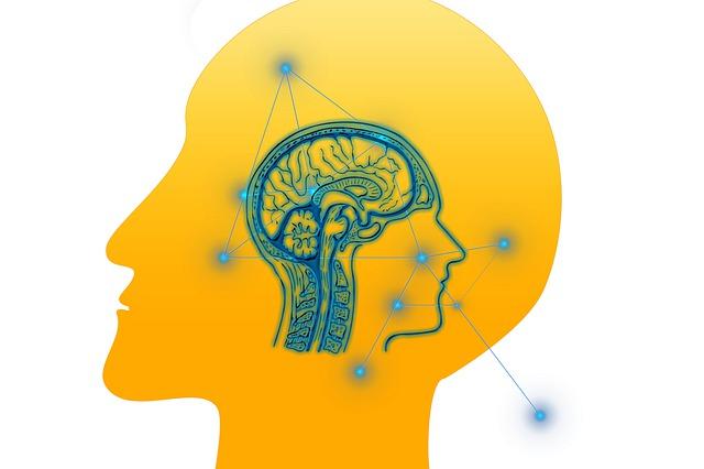 Ossa del cranio, meningi, liquido cerebrospinale, barriera emato-encefalica