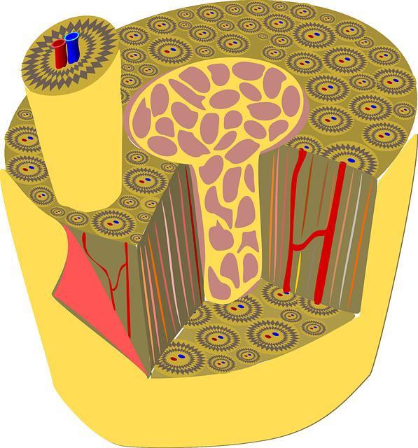 Tessuti anatomia umana – epiteliale connettivo muscolare nervoso